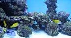Potešte sa pohľadom: Najdizajnovejšie akváriá sveta!