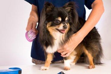 Bezstresové strihanie psíka existuje